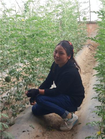 """看""""生命的禁区""""瓜果飘香——噶尔县生态农业产业园"""