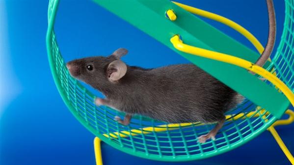 小鼠.jpg