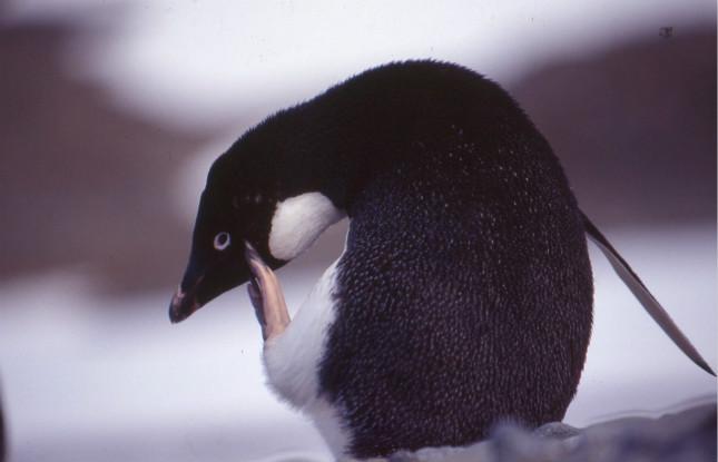 企鹅02_meitu_13.jpg