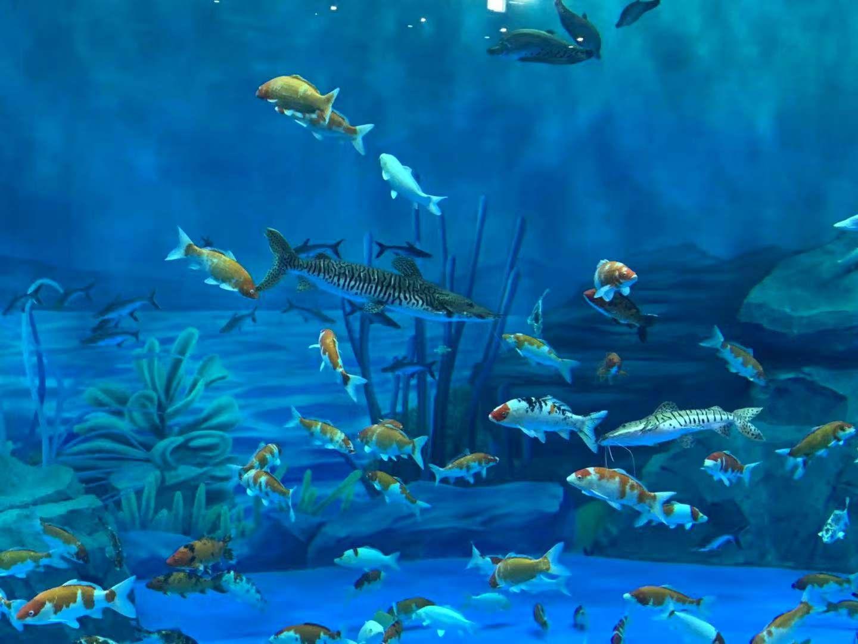 魔都新地标!上海海昌海洋公园今天正式开园迎客