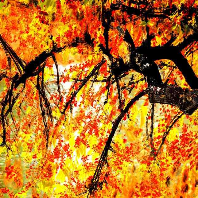3、水彩画系列《绘秋泼墨》(郑庆祥直拍画意摄影)_调整大小_副本_副本.jpg