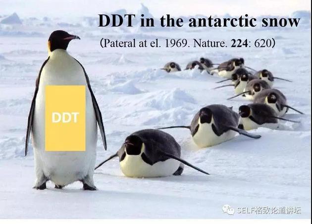 南极雪中积累了2400吨DDT