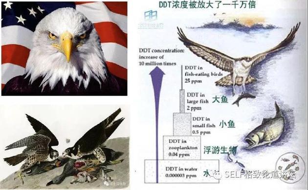 DDT导致鸟类灭绝
