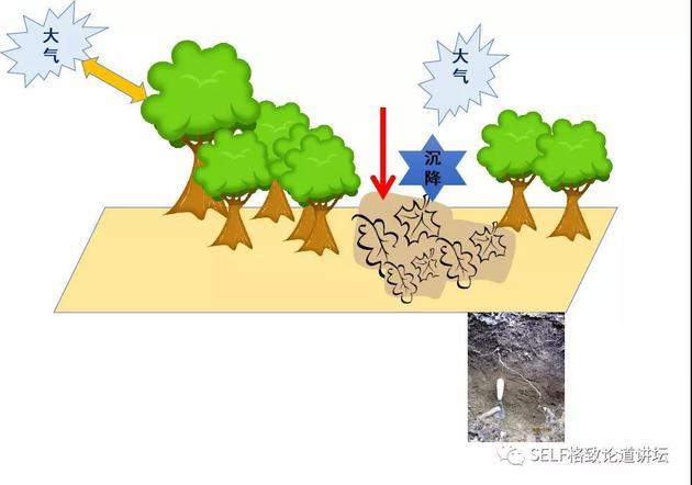 森林泵效应