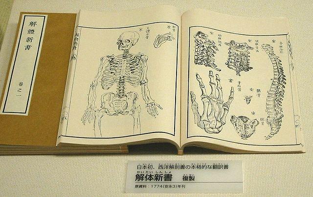 日本解剖.jpg