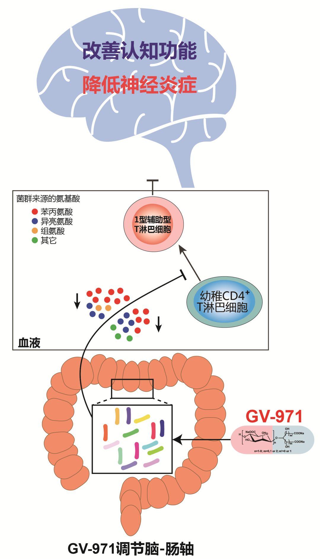 GV-971作用机理示意图.jpg