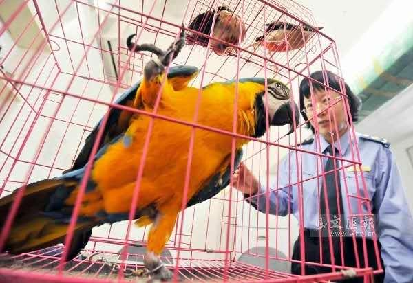 自然·通讯:新西兰鹦鹉可以理解概率