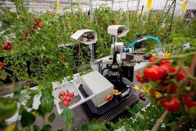 采草莓机器人.jpg