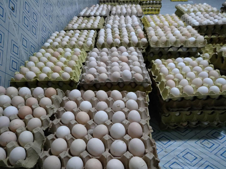 藏鸡蛋 (4).jpg