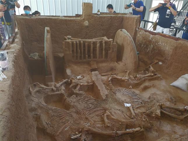 马车遗迹由车体和4匹马的遗骸组成。韩宏摄.jpg