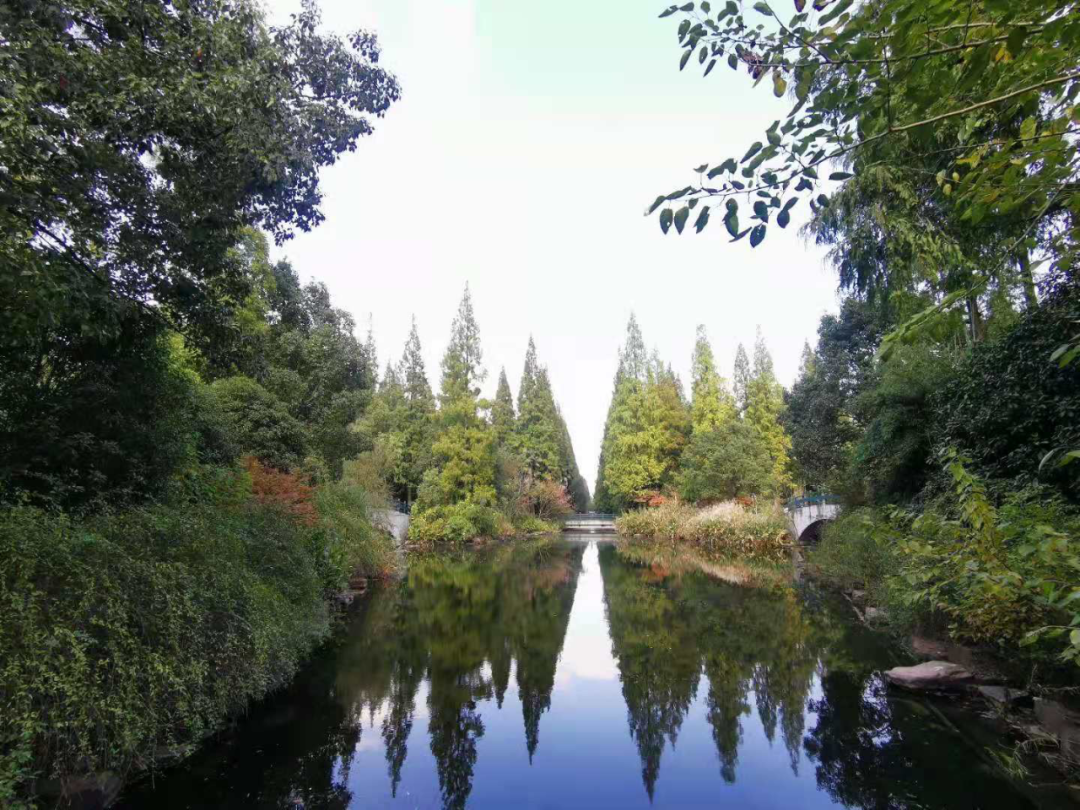 东平森林公园景色。.png