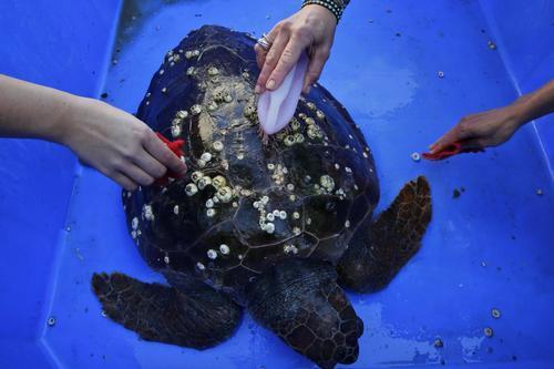 海龟1.jpg