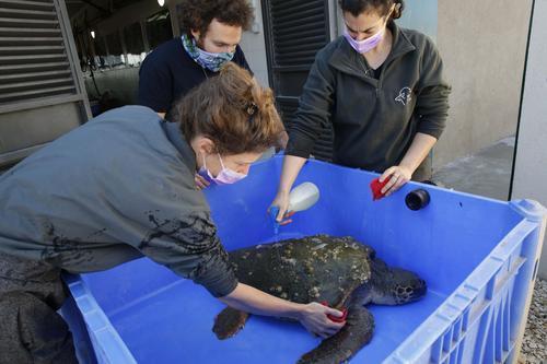 海龟4.jpg