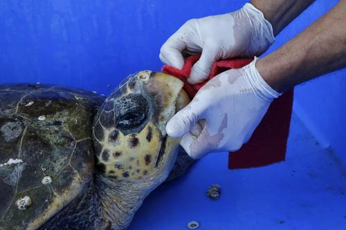 海龟5.jpg