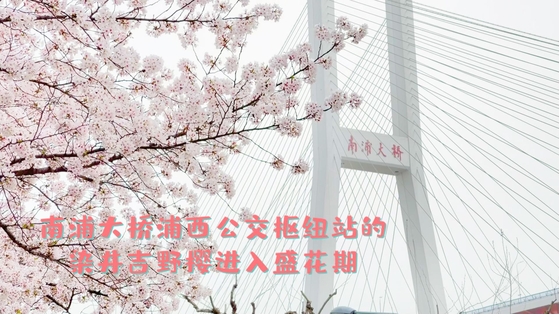 edit_1.00_00_05_06.Still006.jpg