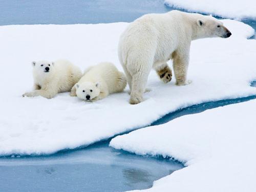 北极1.jpg