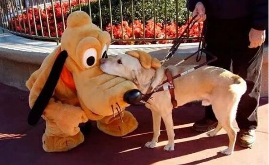 迪士尼玫玫晕倒上热搜……尽管童话是假的,但有人努力希望让童话成真